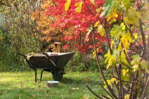 октябрь работы в саду