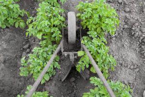 Окучивание картофеля для повышения урожайности