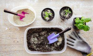 Вермикулит используется как в чистом виде, так и в почвенных смесях